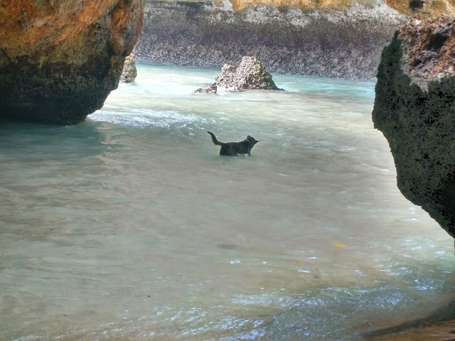 The surfer canine