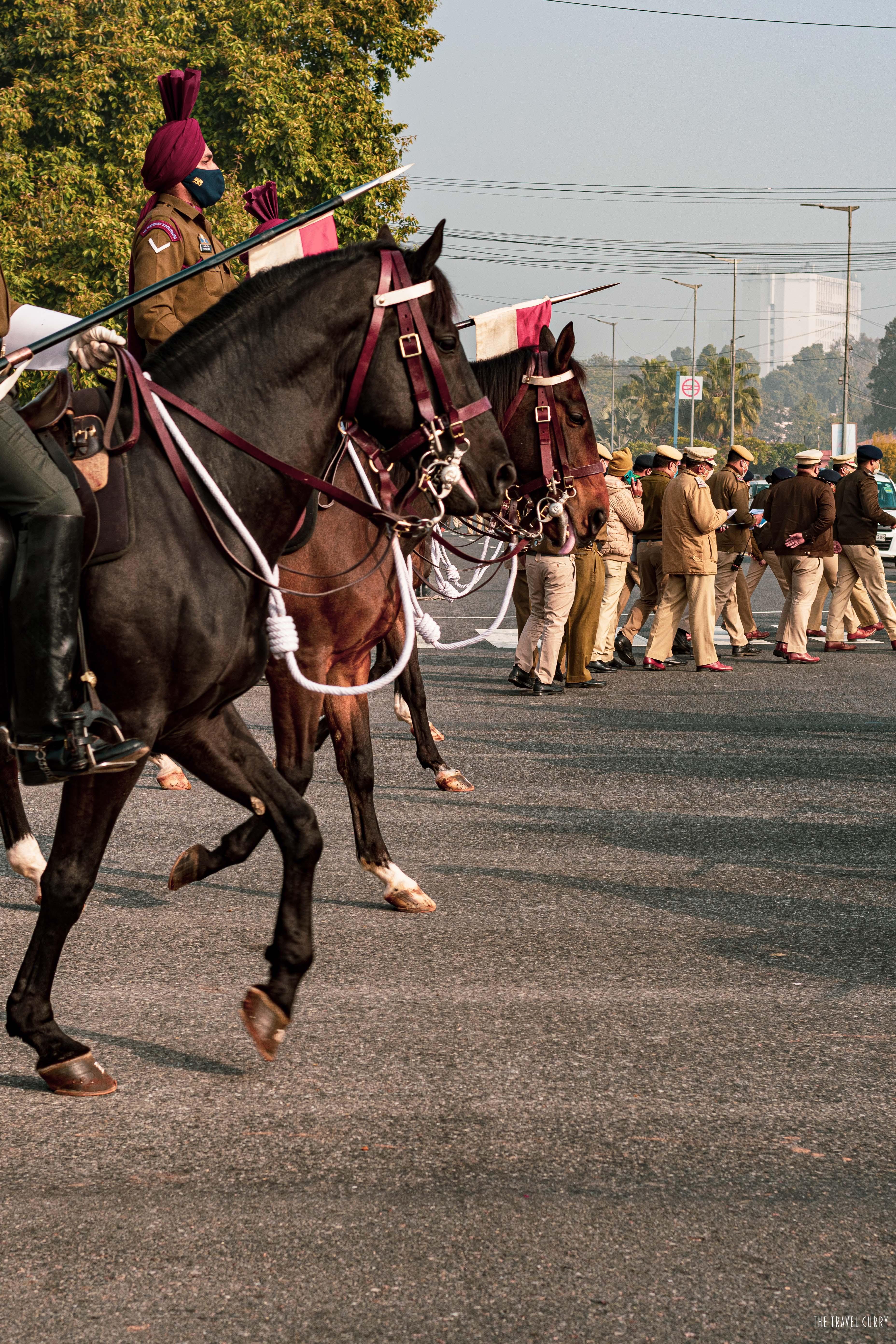 The Oldest Regiment- Horses