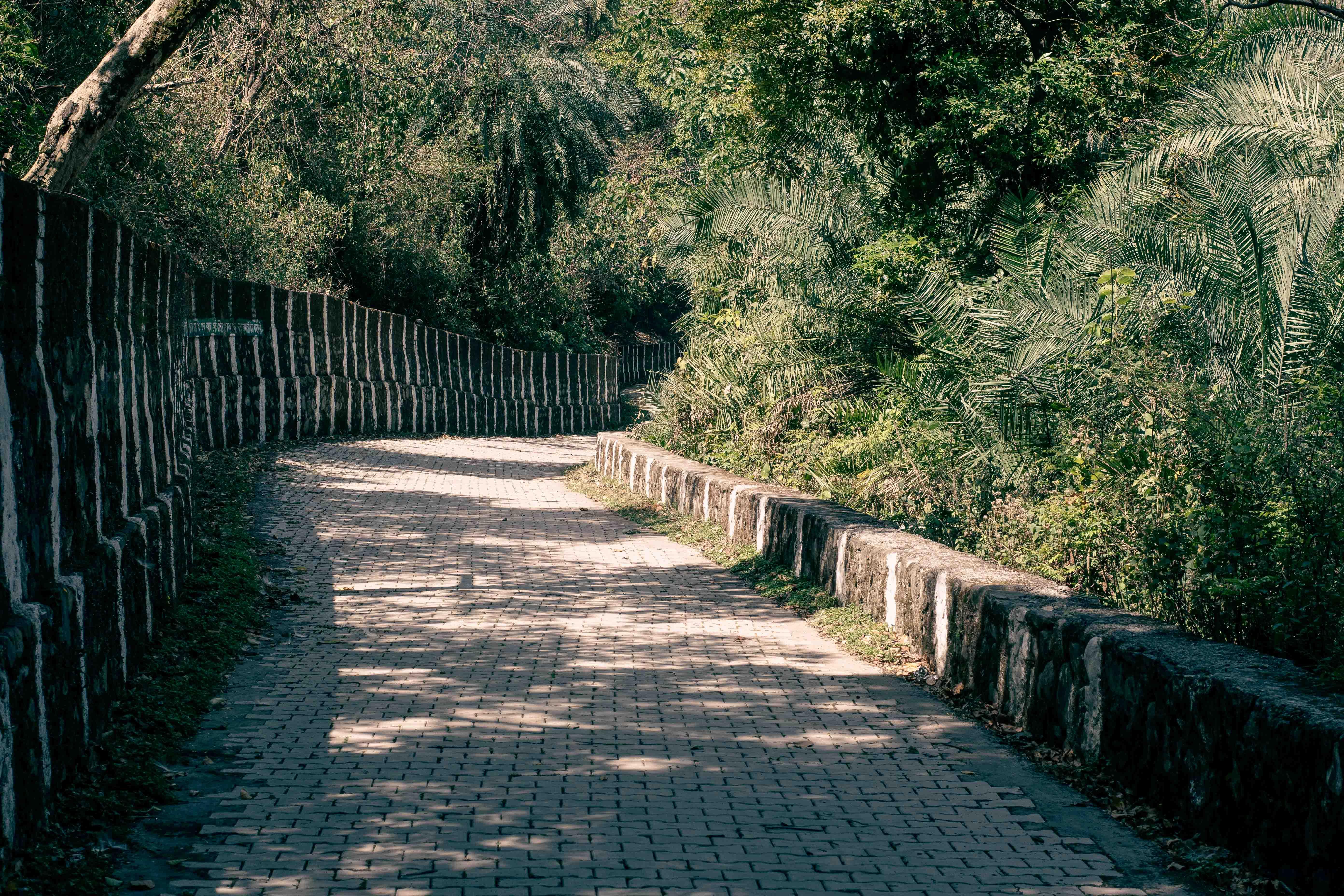 Pathway of Renukaji Zoo